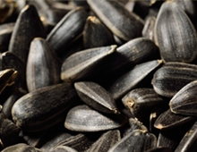black-oil-sunflower-seeds.jpg
