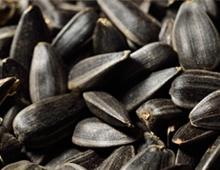 black-oil-sunflower-seeds.jpg